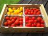 有機ミニトマト4種セット