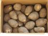 五泉の里芋 3kg