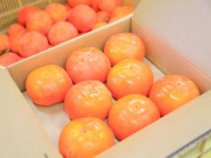 堀内果実園の柿