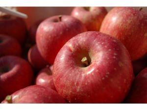 福島 菱沼農園のりんご
