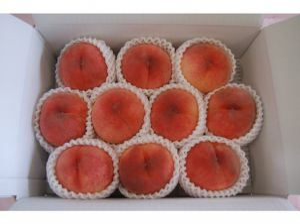 福島 菱沼農園の桃