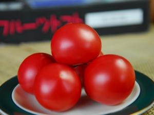 北海道下川のフルーツトマト