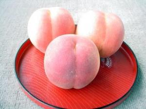 福島 桑折の桃専門農家「愛もも屋」の桃