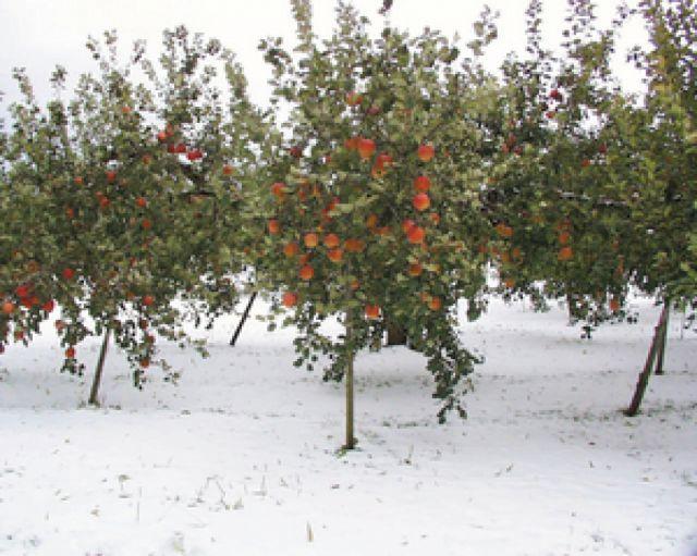 収穫及び商品発送について