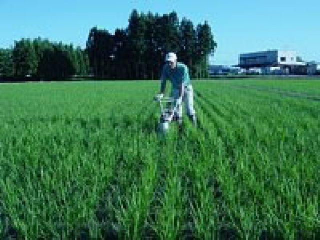 新潟県認証特別栽培米