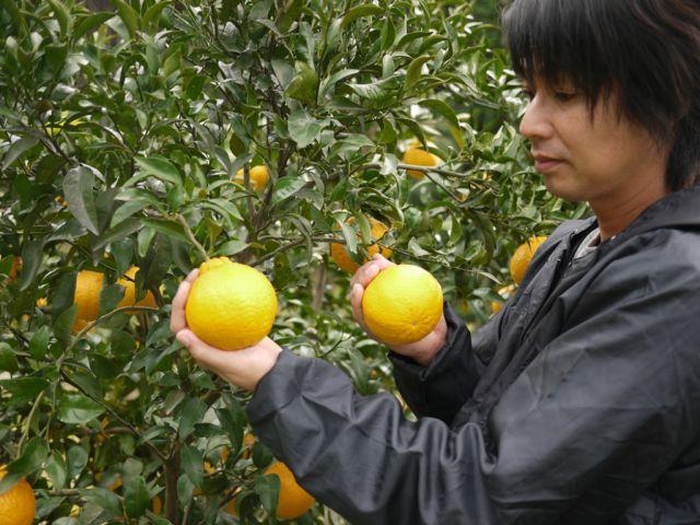 自然本来の力を引き出す農業