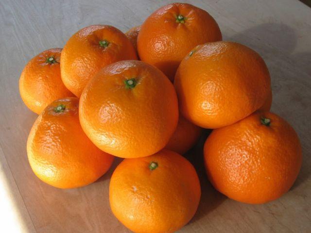 魅力的なフルーツ「伊予柑(いよかん)」