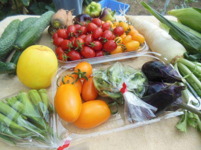 畑で完熟させた野菜です
