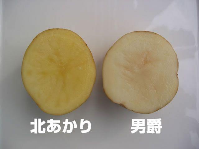 北海道のじゃがいも・玉ねぎ・かぼちゃ03