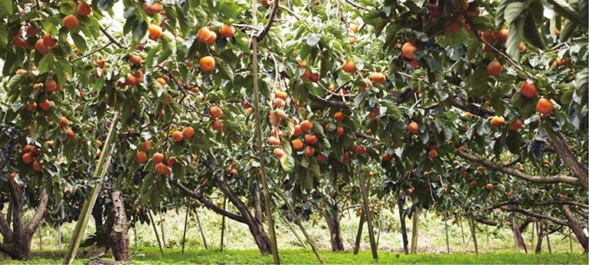 果物と丁寧に向き合う事